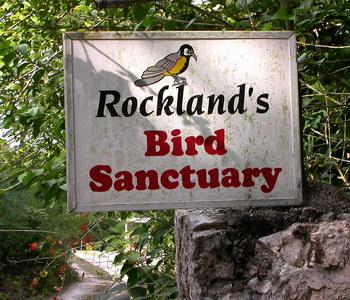 Jamaica Bird Sanctuary